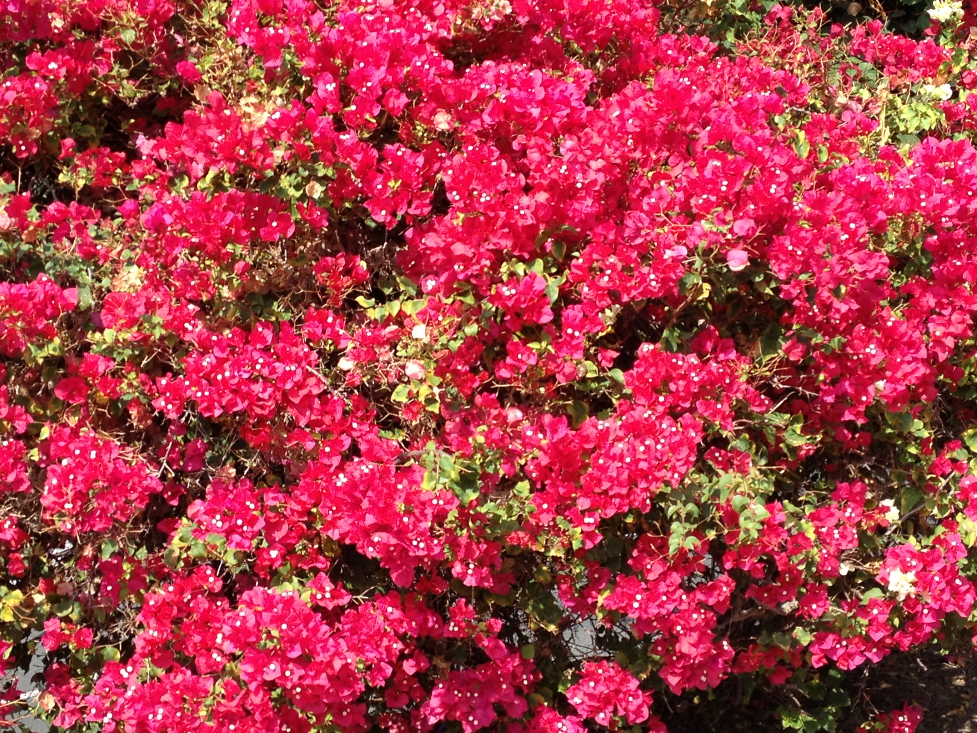 Hawaiian floral and fauna aloha journal page 2 img0217 izmirmasajfo Images