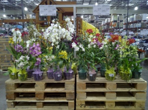An orchid section at the Kona Costco