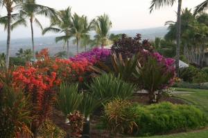 Colorful flowers always seem to be plentiful in Kona